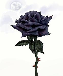 Black-Rose-black-roses-23861419-1440-1752