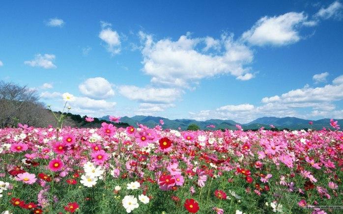 Field-flowers-image6