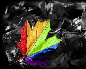 Leaves-Images